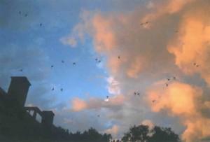 Chimney Swifts Sunset
