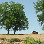 Photo of a small red cabin in a field, with large trees on either side.