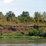 Landscape photo of a river with bright green plants on the bank and brown grass beyond.