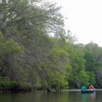 Wide shot of canoe with two people in it dwarfed by budding trees.