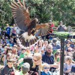 open-house_sky-king-falconry