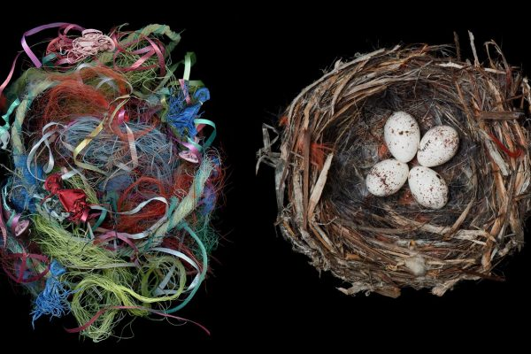 Image: Sharon Beals Birds Nests