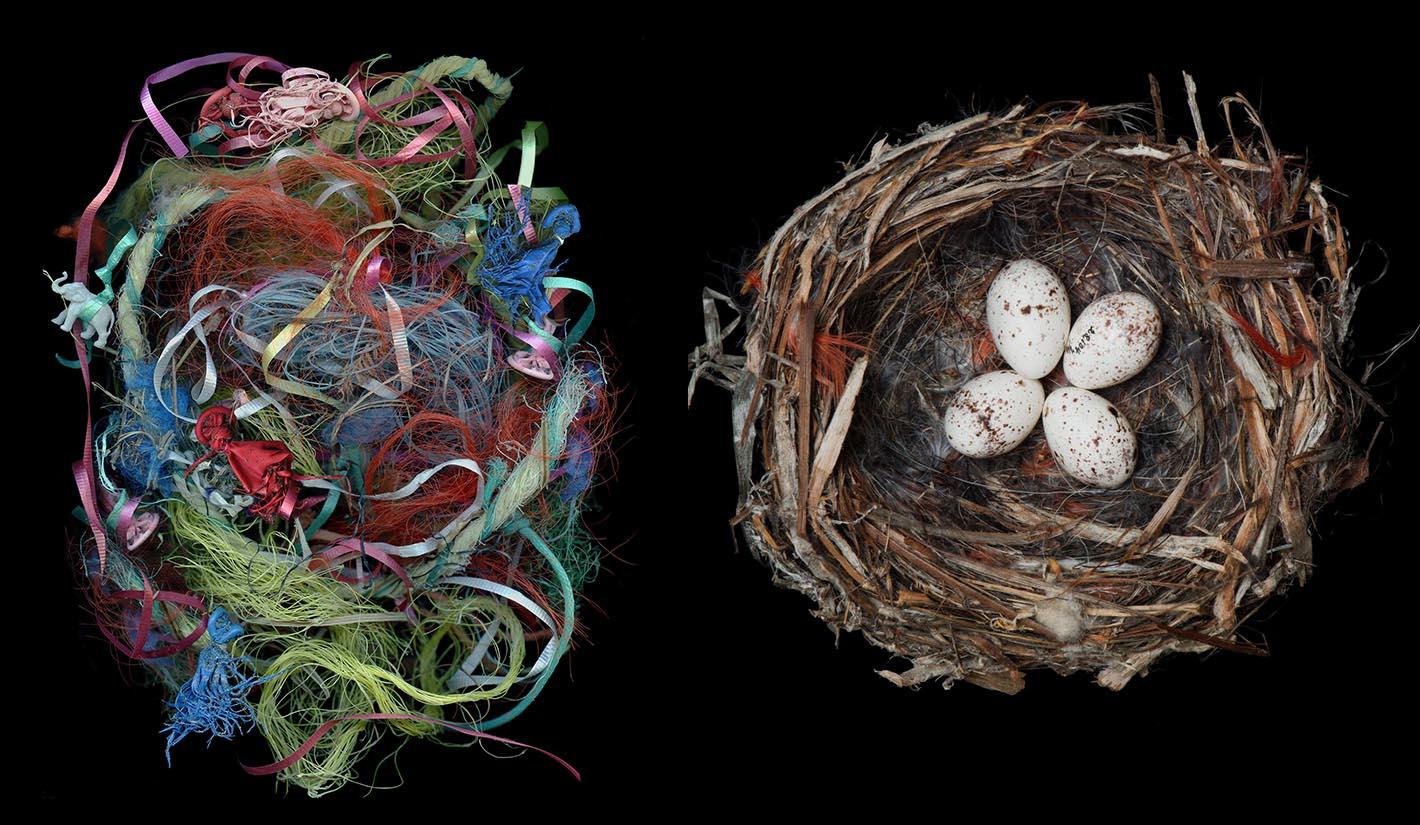 Image: Sharon Beals Birds Nests